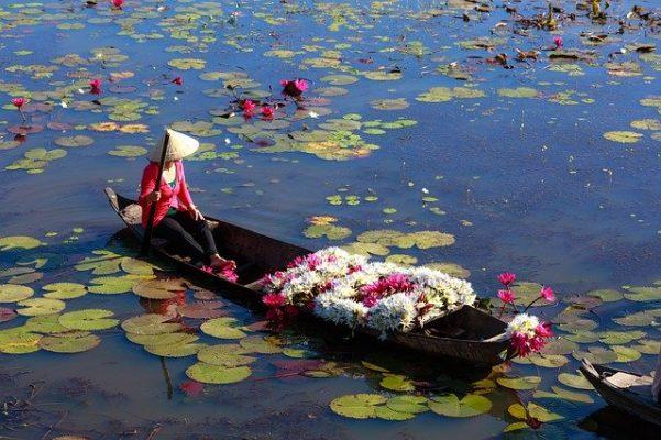 Vietnam Lotus e1595708441520