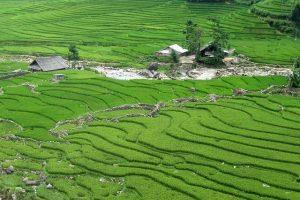 Sapa Vietnam im Grün in der Sommerzeit