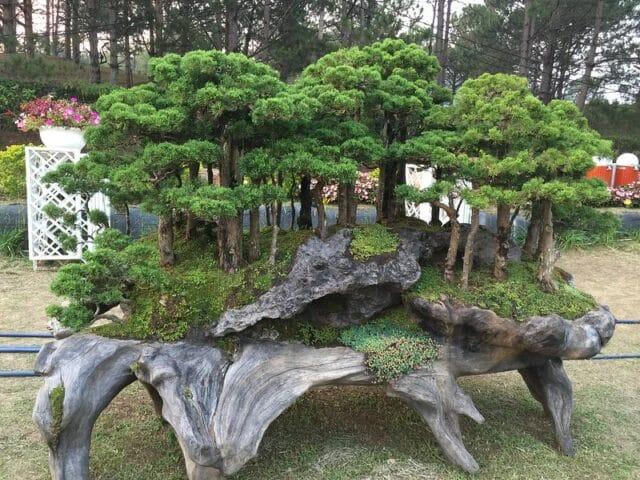 Bon Sai Garden in Da Lat